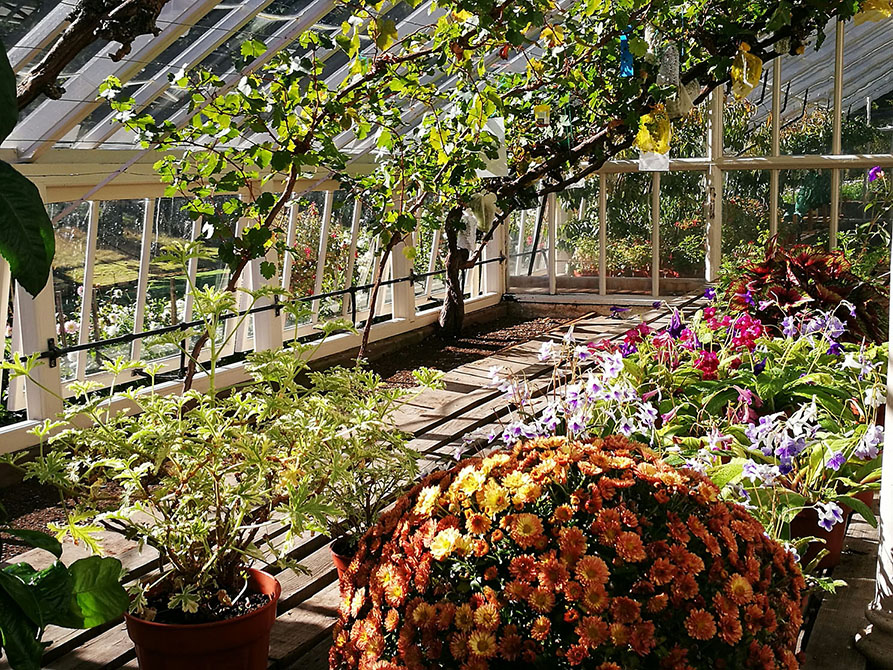drummond_castle_greenhouse_wine_ninjas.jpg