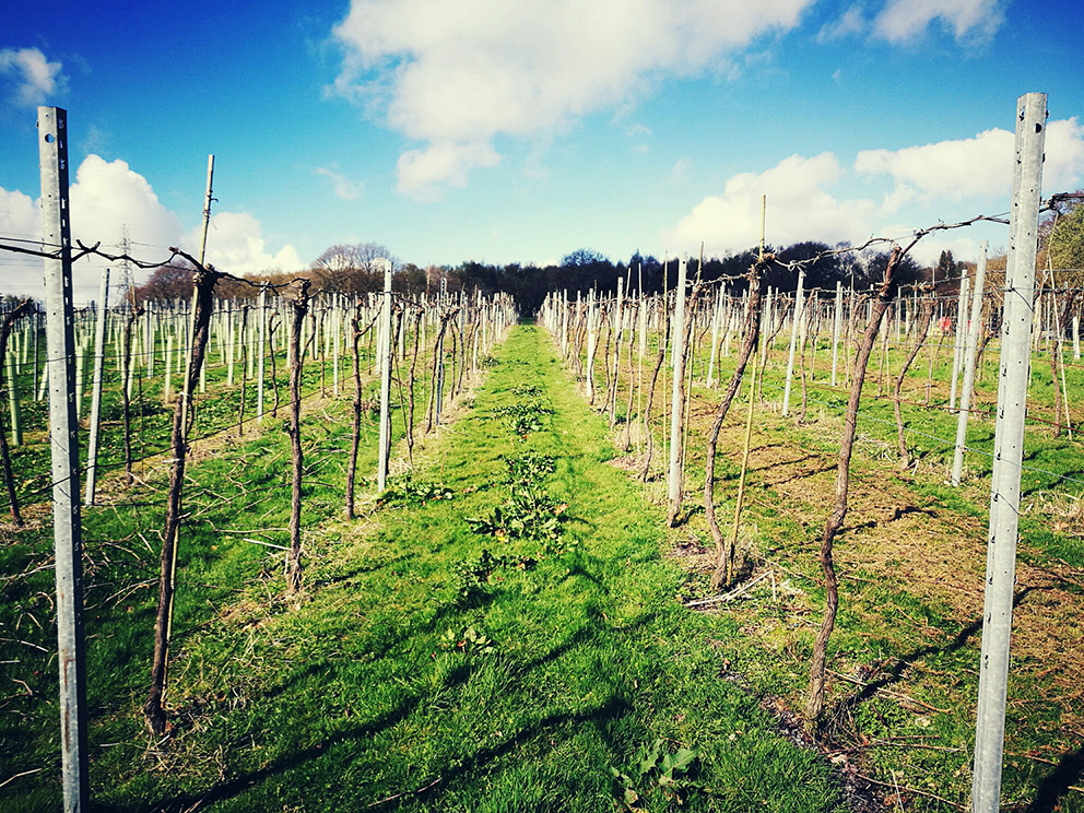 Bolney Estate vineyard