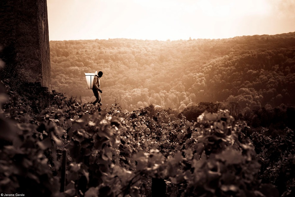 wine photographer of the year 2018