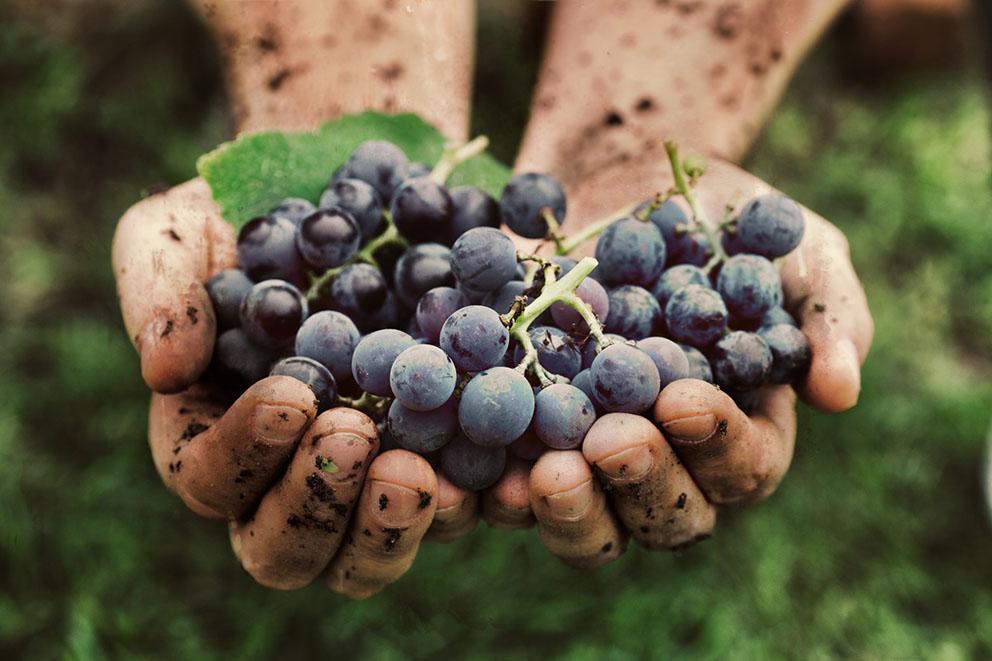 worlds healthiest red wine