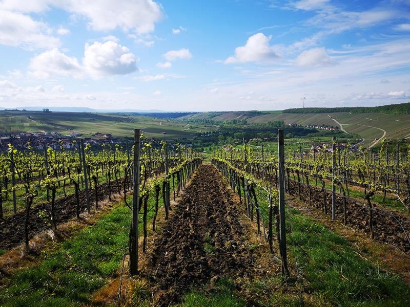 franken wine region
