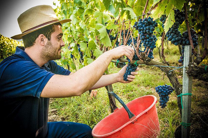 bosco del merlo wine ninjas